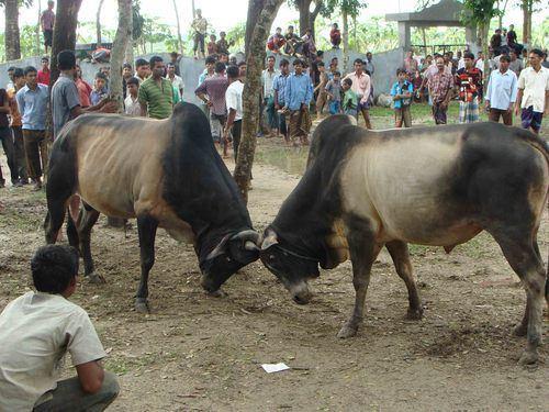 Bhatpara Culture of Bhatpara