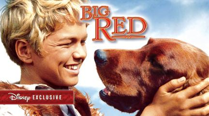 Big Red (film) Pupular Culture How Fashion and Films Affect Breed Popularity