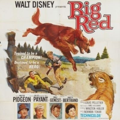 Big Red (film) Download Big Red 1962 movie Watch streaming movies Download movie