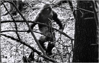 Bigfoot Top 10 Bigfoot Sightings of the Last 5 Years Finding Bigfoot