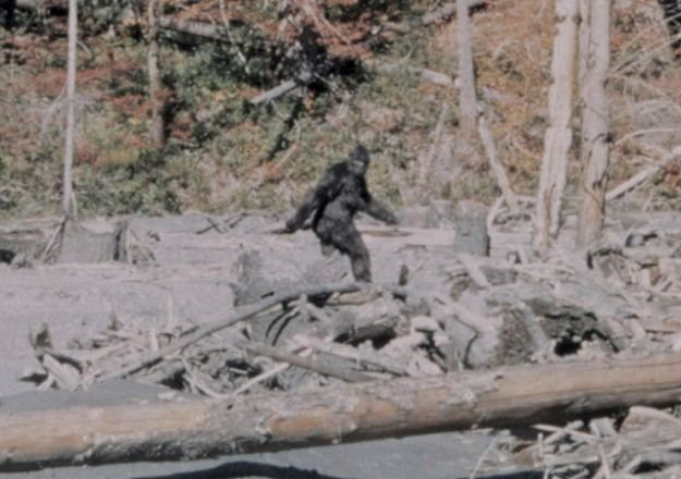 Bigfoot Bigfoot Missing link extradimensional entity or dude in a suit
