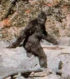 Bigfoot httpsuploadwikimediaorgwikipediaen999Pat