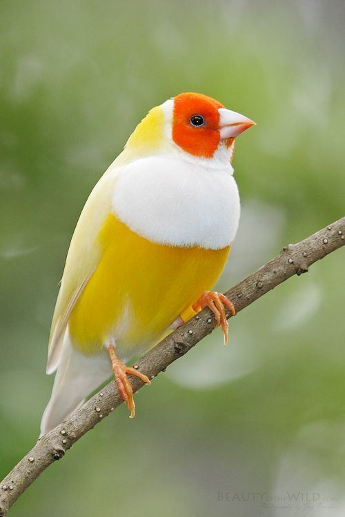 Bird 1000 ideas about Birds on Pinterest Pretty birds Beautiful birds
