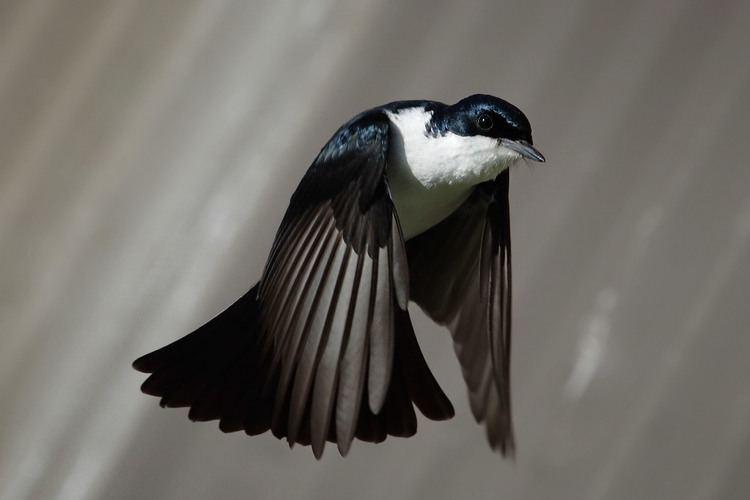 Bird Bird Wikipedia