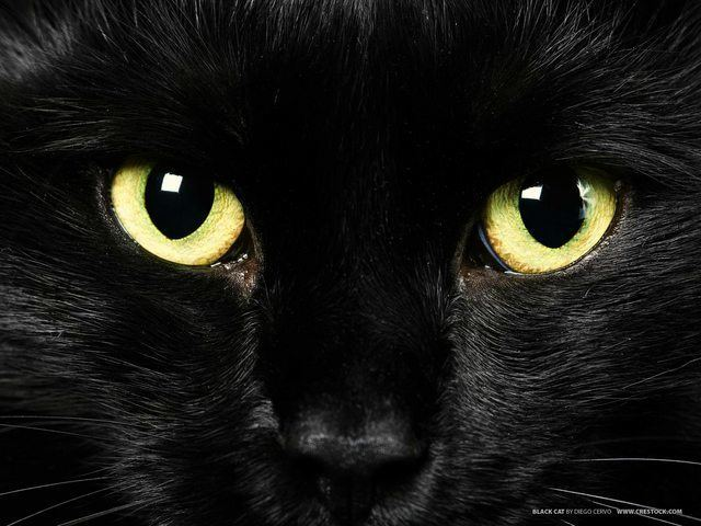 Black cat 28 Reasons To Love Black Cats