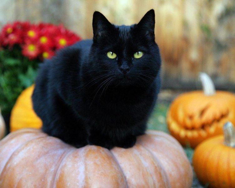 Black cat Best Black Cat Names The Ultimate List 109 ideas