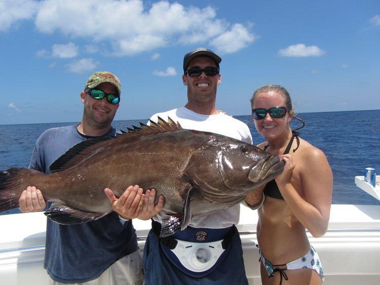 Black grouper HowTo Catch Black Grouper Florida Sportsman