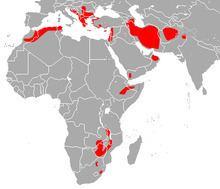 Blasius's horseshoe bat httpsuploadwikimediaorgwikipediacommonsthu