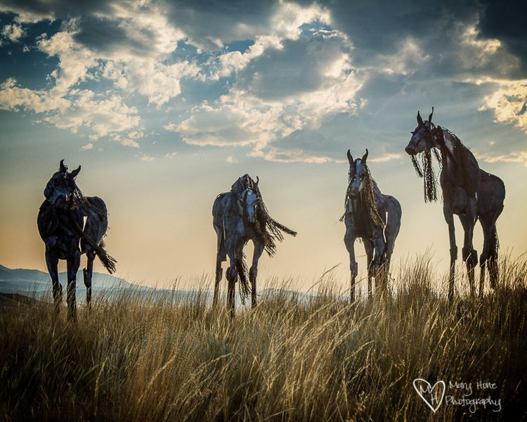 Bleu Horses Bleu Horses of Three Forks Montana Tales from the Backroad