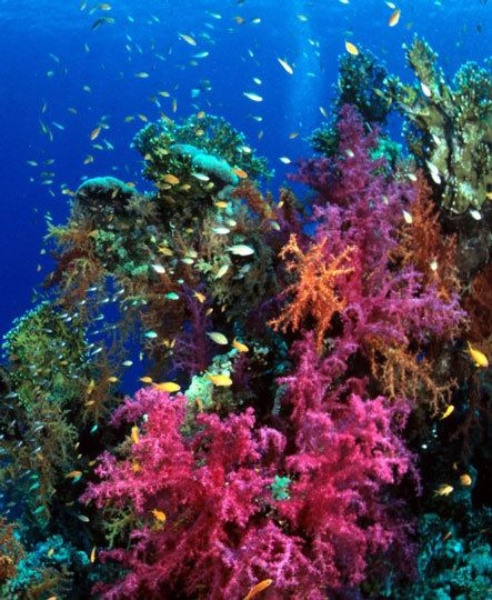 Bligh Water Koro Sea Diving in Bligh Water Fiji E6 Namena and More