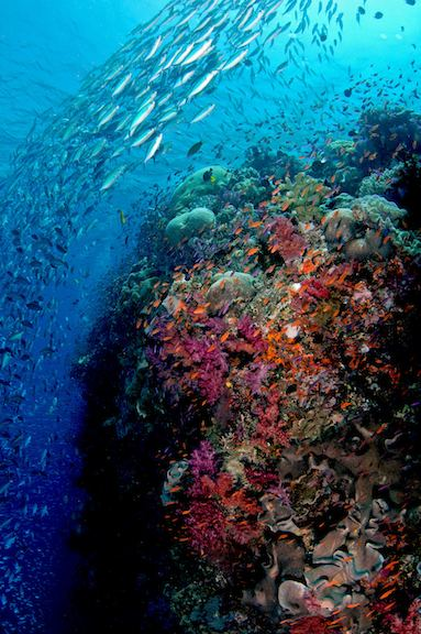 Bligh Water SCUBA Diving Fiji39s Bligh Water Dive Sites Dive Wananavu Fiji Resort