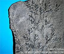 Blue Beach wwwbluebeachfossilmuseumcomimagesupporthomep