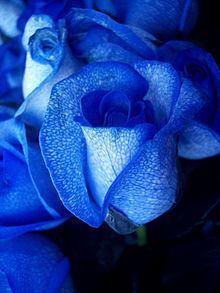 Blue rose httpsuploadwikimediaorgwikipediacommonsthu