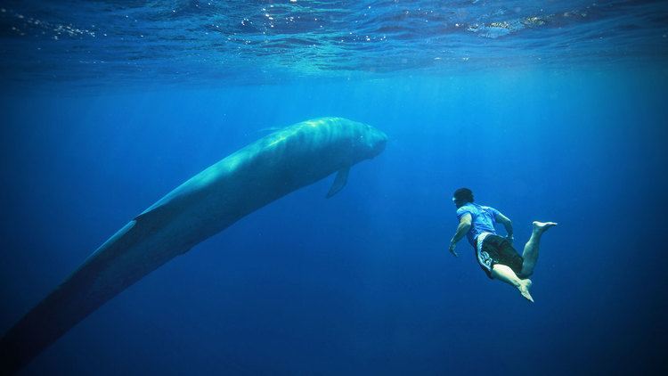 Blue whale Blue Whale Watching Holidays amp Expeditions Natural World Safaris