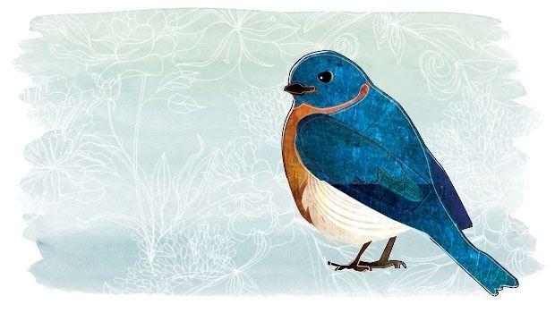 Bluebird of happiness The Bluebird of Happiness Live Happy Magazine