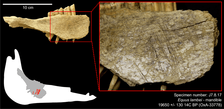 Bluefish Caves Earliest Human Presence in North America Dated to the Last Glacial
