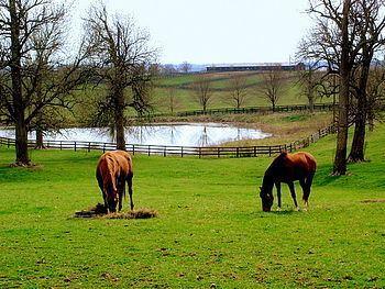 Bluegrass region httpsuploadwikimediaorgwikipediacommonsthu