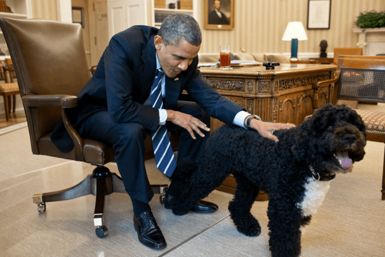 Bo (dog) Bo Obama Photos Presidential Pet Museum