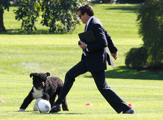 Bo (dog) First Dog Bo Obama Turns 7 See the Birthday Boy39s Most Adorable