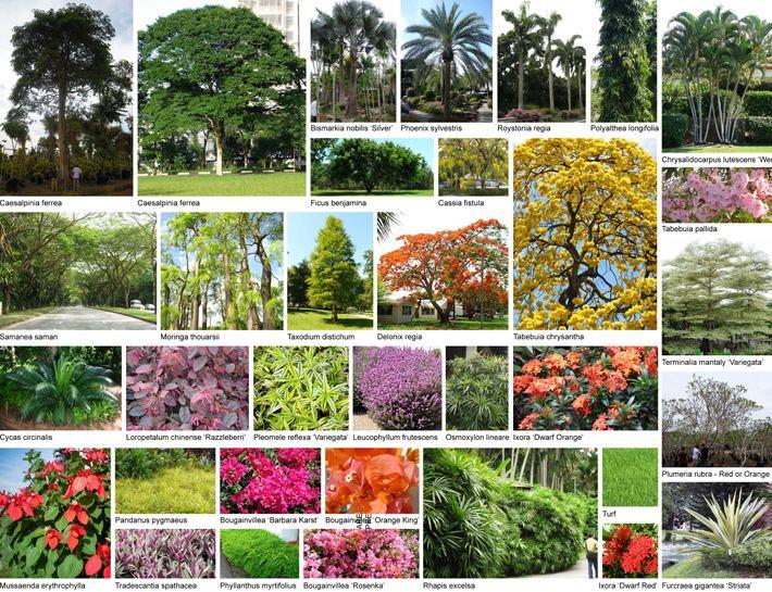 Bocaue, Bulacan Beautiful Landscapes of Bocaue, Bulacan