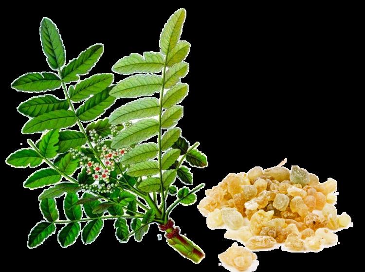 Boswellia serrata Boswellia Serrata anti inflammatoire naturel NATURE ENERGIE VITA LITE