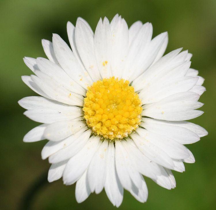 Botanical name