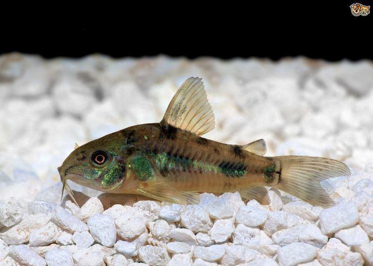 bottom feeders Deepsea