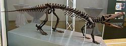 Boverisuchus httpsuploadwikimediaorgwikipediacommonsthu