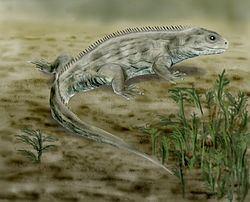 Brachyrhinodon httpsuploadwikimediaorgwikipediacommonsthu