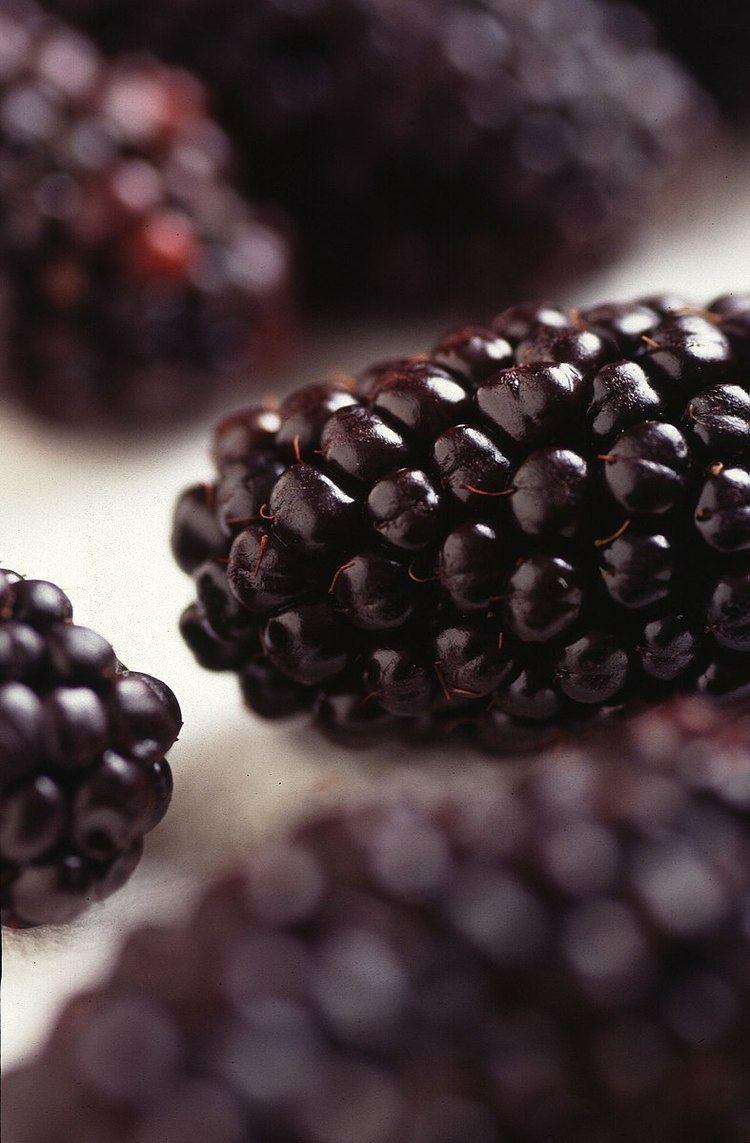 Bramble fruit