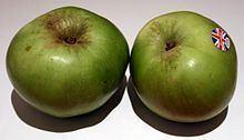 Bramley apple Bramley apple Wikipedia