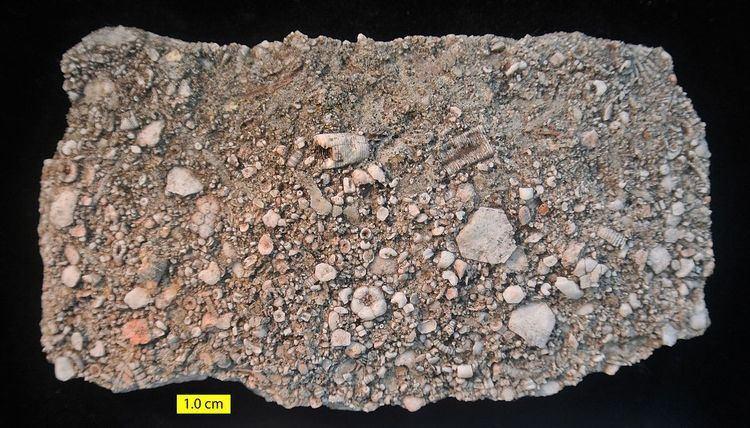 Brassfield Limestone