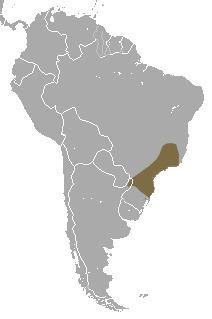 Brazilian gracile opossum httpsuploadwikimediaorgwikipediacommonscc