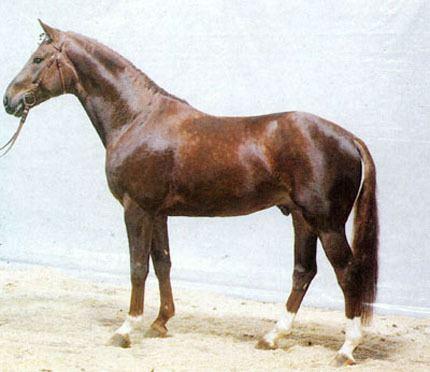 Brentano II Brentano II Superior Equine Sires Equine Frozen Semen Import and
