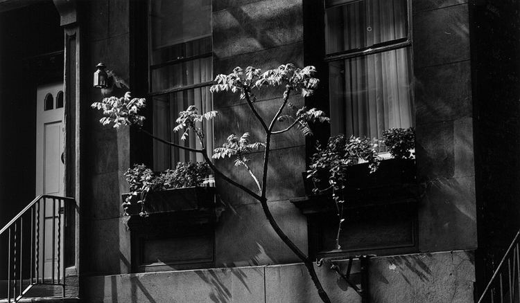 Brett Weston Home Brett Weston