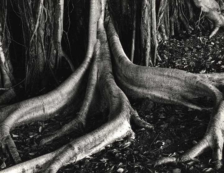 Brett Weston Weston Brett Photography History The Red List