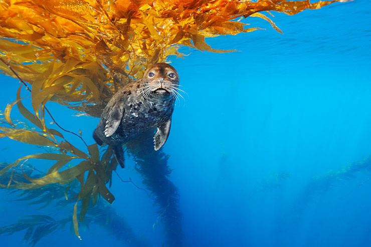 Brian Skerry Brian Skerry National Geographic Photographer