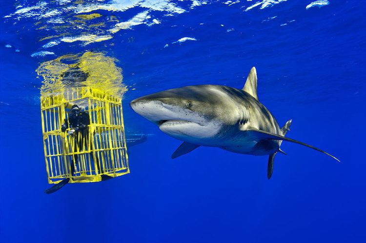 Brian Skerry Learn Explore Topic Results View Article Topics Nikon
