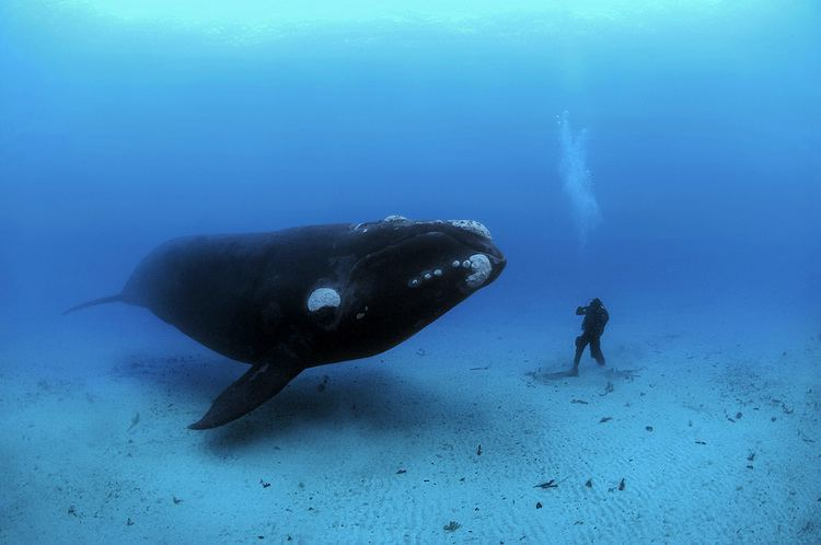 Brian Skerry Brian Skerry Photography
