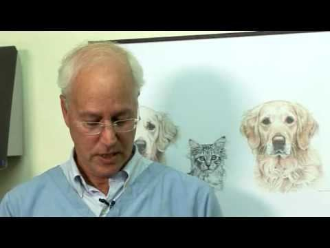 Bruce Fogle Bruce Fogle gives cat owners expert tips on how to avoid