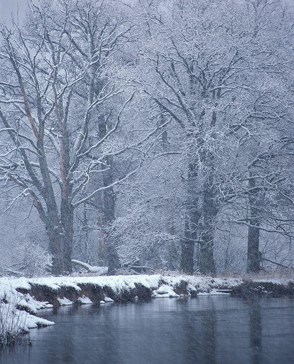 Bryansky Les Nature Reserve