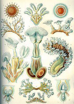 Bryozoa httpsuploadwikimediaorgwikipediacommonsthu