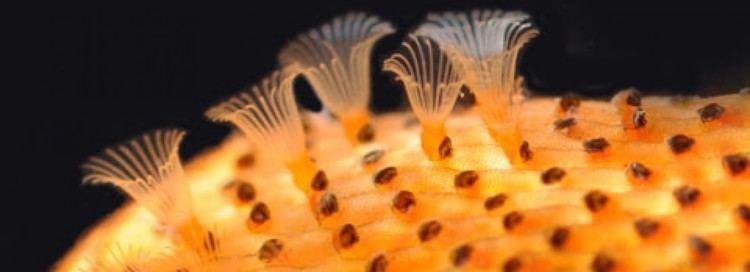 Bryozoa Bryozoa This site is a broad overview of Bryozoa written by