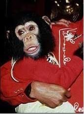 Bubbles (chimpanzee) httpsuploadwikimediaorgwikipediaen55fBub