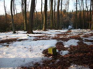 Buchwaldskopf httpsuploadwikimediaorgwikipediacommonsthu