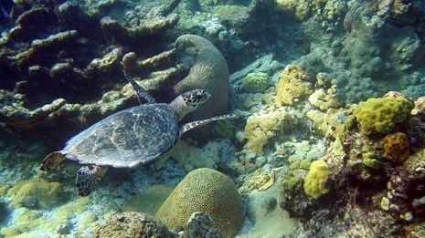 Buck Island Reef National Monument httpswwwnpsgovcommonuploadsgridbuilderak