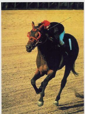 Buckpasser Buckpasser 1966 Horse of the Year