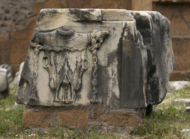 Bucranium Metope with bucranium from entablement of the Basilica Aemilia Rome