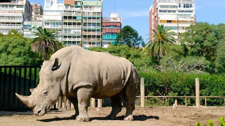 Buenos Aires Zoo Buenos Aires Zoo in Buenos Aires Expedia