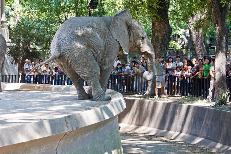 Buenos Aires Zoo 140yearold Buenos Aires zoo is closing and moving animals to